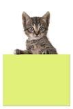 Χαριτωμένες 5 ηλικίας τιγρέ εβδομάδες γατών μωρών που κρατούν κίτρινο έναν μετα αυτό έγγραφο Στοκ φωτογραφία με δικαίωμα ελεύθερης χρήσης