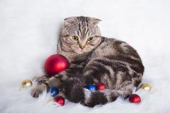 Χαριτωμένες σκωτσέζικες πτυχές με τις σφαίρες Χριστουγέννων στην άσπρη γούνα Στοκ εικόνα με δικαίωμα ελεύθερης χρήσης