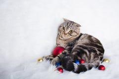 Χαριτωμένες σκωτσέζικες πτυχές με τις σφαίρες Χριστουγέννων στην άσπρη γούνα Στοκ Εικόνες