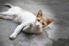 Χαριτωμένη άσπρη γάτα με μια ενδιαφέρουσα και περίεργη έκφραση ANS στοκ εικόνα