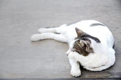 Χαριτωμένη άσπρη γάτα στο πάτωμα στοκ φωτογραφίες