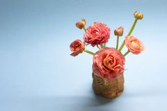 Χαριτωμένη ανθοδέσμη των ευγενών ροδαλών βατραχίων σε ένα μπλε υπόβαθρο στοκ φωτογραφία με δικαίωμα ελεύθερης χρήσης