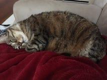 Χαριτωμένη αρσενική τιγρέ γάτα Στοκ Φωτογραφίες