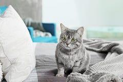 Χαριτωμένη αστεία γάτα στο κρεβάτι στοκ φωτογραφία
