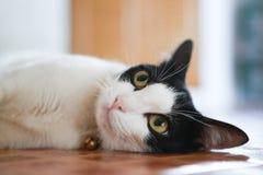 Χαριτωμένη γάτα άτακτη στοκ εικόνες