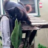 Χαριτωμένη γάτα γατακιών Στοκ Εικόνα