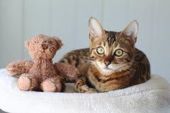 Χαριτωμένη γάτα και μια teddy αρκούδα στοκ φωτογραφίες με δικαίωμα ελεύθερης χρήσης