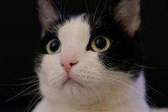 Χαριτωμένη γάτα με τα μεγάλα κίτρινα μάτια Στοκ εικόνα με δικαίωμα ελεύθερης χρήσης