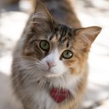 Χαριτωμένη γάτα με την ετικέττα καρδιών στοκ εικόνες