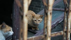 Χαριτωμένη γάτα με τη λυπημένη έκφραση στοκ εικόνες