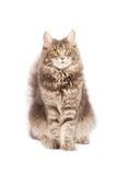 Χαριτωμένη γάτα που απομονώνεται πέρα από το άσπρο υπόβαθρο Στοκ Φωτογραφία