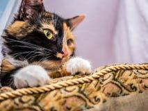 Χαριτωμένη γάτα που βρίσκεται στο μαξιλάρι Στοκ Εικόνα