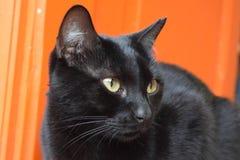 Χαριτωμένη γάτα που εξετάζει την πλευρά Στοκ Εικόνα