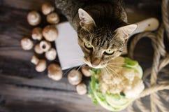 Χαριτωμένη γάτα που στέκεται στον αγροτικό πίνακα με τα λαχανικά Στοκ φωτογραφίες με δικαίωμα ελεύθερης χρήσης