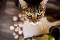 Χαριτωμένη γάτα που στέκεται στον αγροτικό πίνακα με τα λαχανικά Στοκ φωτογραφία με δικαίωμα ελεύθερης χρήσης
