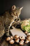 Χαριτωμένη γάτα που στέκεται στον αγροτικό πίνακα με τα λαχανικά Στοκ εικόνα με δικαίωμα ελεύθερης χρήσης
