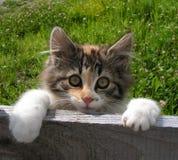 Χαριτωμένη γάτα που τιτιβίζει πέρα από το φράκτη Στοκ Εικόνα