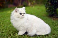 Χαριτωμένη γάτα σε έναν χορτοτάπητα Στοκ εικόνες με δικαίωμα ελεύθερης χρήσης
