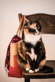 Χαριτωμένη γάτα στην εκλεκτής ποιότητας καρέκλα Στοκ Εικόνες