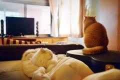 Χαριτωμένη γάτα στην κρεβατοκάμαρα με μια άνετη ατμόσφαιρα Στοκ Εικόνα