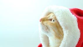Χαριτωμένη γάτα στο κοστούμι santa απόθεμα βίντεο