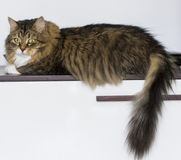 Χαριτωμένη γάτα στο σπίτι που εξετάζει τη κάμερα στοκ εικόνες