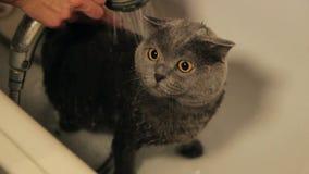 Χαριτωμένη γάτα στο σωλήνα λουτρών κάτω από το ντους Χαμηλή γωνία φιλμ μικρού μήκους