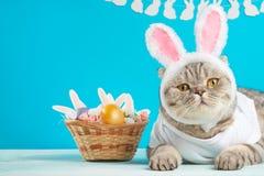 Χαριτωμένη γάτα, σύνθεση Πάσχας Γάτα ως κουνέλι, υπόβαθρο για Πάσχα, έμβλημα, μια θέση για να τοποθετήσει το κείμενο στοκ φωτογραφία με δικαίωμα ελεύθερης χρήσης