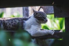 Χαριτωμένη γάτα του Βιρμανού στοκ φωτογραφία με δικαίωμα ελεύθερης χρήσης