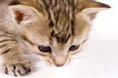 Χαριτωμένη γάτα στοκ φωτογραφία