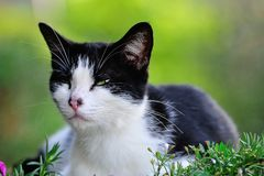 Χαριτωμένη γάτα Στοκ Εικόνα