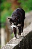 Χαριτωμένη γάτα Στοκ εικόνες με δικαίωμα ελεύθερης χρήσης