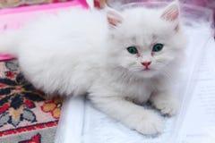 Χαριτωμένη γάτα Στοκ Φωτογραφίες