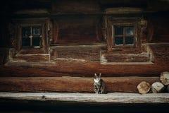 Χαριτωμένη γκρίζα συνεδρίαση γατών κοντά στο παλαιό ξύλινο σπίτι σε Σκανδιναβία, norw Στοκ Εικόνες
