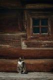 Χαριτωμένη γκρίζα συνεδρίαση γατών κοντά στο παλαιό ξύλινο σπίτι σε Σκανδιναβία, norw Στοκ φωτογραφία με δικαίωμα ελεύθερης χρήσης