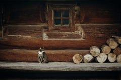 Χαριτωμένη γκρίζα συνεδρίαση γατών κοντά στο παλαιό ξύλινο σπίτι σε Σκανδιναβία, norw Στοκ Φωτογραφία