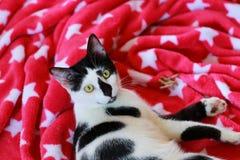 Χαριτωμένη γραπτή γάτα μπροστά από ένα κόκκινο κάλυμμα Στοκ Φωτογραφία