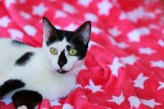 Χαριτωμένη γραπτή γάτα μπροστά από ένα κόκκινο κάλυμμα Στοκ φωτογραφία με δικαίωμα ελεύθερης χρήσης