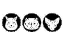 Χαριτωμένη διανυσματική απεικόνιση των φυλών γατών, καθορισμένο πορτρέτο ζώων κατοικίδιων ζώων σε ένα ύφος κινούμενων σχεδίων διανυσματική απεικόνιση