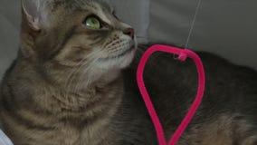 Χαριτωμένη εύθυμη γατών κινηματογράφηση σε πρώτο πλάνο ματιών πορτρέτου πράσινη φιλμ μικρού μήκους