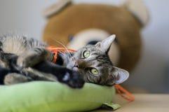 Χαριτωμένη εύθυμη μαρμάρινη γάτα που ζητά την προσοχή, που παίζει με τη φωτεινή πορτοκαλιά σειρά και που προσπαθεί να είναι το πι στοκ εικόνες με δικαίωμα ελεύθερης χρήσης