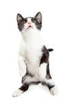 Χαριτωμένη εύθυμη συνεδρίαση γατακιών επάνω Στοκ Εικόνες