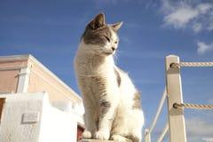 Χαριτωμένη κατάψυξη γατών το καλοκαίρι Στοκ εικόνες με δικαίωμα ελεύθερης χρήσης