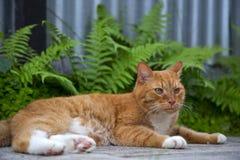 Χαριτωμένη κόκκινη γάτα που βρίσκεται στη σκιά στοκ φωτογραφίες
