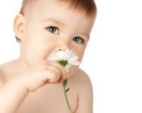 χαριτωμένη μυρωδιά μαργαριτών παιδιών στοκ εικόνα με δικαίωμα ελεύθερης χρήσης
