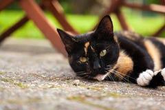 Χαριτωμένη οκνηρή γάτα που βάζει στο τραχύ σκυρόδεμα στοκ φωτογραφία