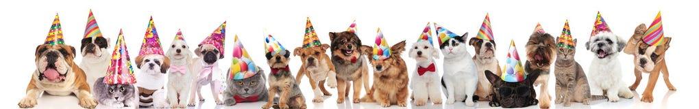 Χαριτωμένη ομάδα πολλών γατών και σκυλιών έτοιμων για το κόμμα στοκ φωτογραφία με δικαίωμα ελεύθερης χρήσης