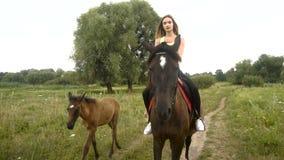 Χαριτωμένη οδήγηση κοριτσιών καβάλλα στο όμορφο καφετί άλογο απόθεμα βίντεο