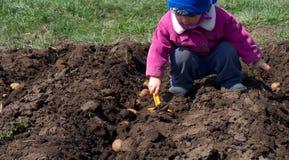 Χαριτωμένη πατάτα σποράς μικρών κοριτσιών σε έναν υπόλοιπο κόσμο, διαδικασία σποράς. στοκ φωτογραφία