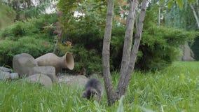Χαριτωμένη περίεργη γάτα μωρών που ελέγχει έξω το περιβάλλον που παίζει και που περπατά στον κήπο - απόθεμα βίντεο